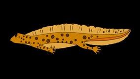 Geel Newt Swimming stock illustratie