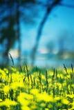 Geel op blauw stock fotografie