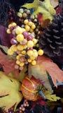 Geel, Oranje, Dalingsbladeren Royalty-vrije Stock Afbeeldingen