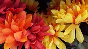 Geel, Oranje, Dalingsbladeren Royalty-vrije Stock Foto