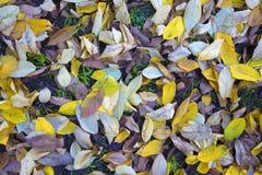 Geel, Oranje en bruin Autumn Leaves Royalty-vrije Stock Afbeeldingen