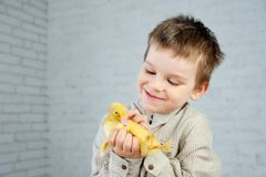 Geel pasgeboren eendje in de handen van de kleine jongen op een witte achtergrond royalty-vrije stock afbeeldingen