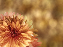 Geel-rode de herfstbloemen, op goud vage achtergrond close-up Heldere bloemensamenstelling, kaart voor de vakantie collage van Royalty-vrije Stock Afbeeldingen