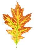 Geel-rood de herfstblad royalty-vrije stock foto