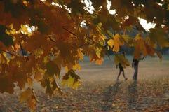 Geel seizoen Stock Foto