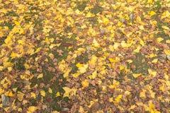 Geel tapijt Royalty-vrije Stock Afbeelding