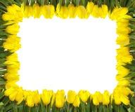 Geel tulpenframe Stock Fotografie