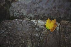 Geel verlof op een steen Royalty-vrije Stock Foto
