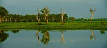 Geel Water Royalty-vrije Stock Foto's