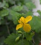 Geel weinig bloem stock fotografie