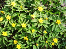 Geel wild bloemenpatroon Royalty-vrije Stock Foto's