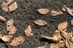 Geelachtige droge bladerendaling op zwart asfalt tijdens hete dagen stock afbeelding