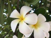 Geelachtige witte bloem royalty-vrije stock afbeelding