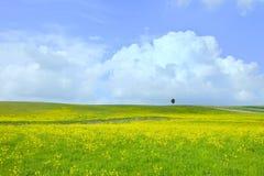 Geelgroen gebied, boom en lichte bewolkte blauwe hemel Stock Foto