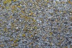 Geelgroen mos op de achtergrond van de steentextuur stock afbeelding