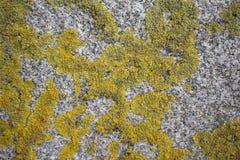 Geelgroen mos op de achtergrond van de steentextuur royalty-vrije stock foto's