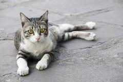 Geelgroen ogen jong katje stock foto's