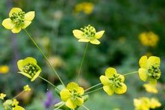 Geelgroene bloemen Royalty-vrije Stock Foto's