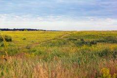 Geelgroene grasrijke vallei met voetpad en bewolkte hemel stock fotografie