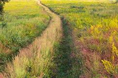 Geelgroene grasrijke weide met voetpad stock afbeelding