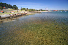 Geelong Park Coast Australia. Shallow water marine growth emanates through the clear waters of the coastline of Geelong Waterfront Park at Eastern Beach Royalty Free Stock Photos