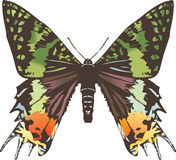 Geen and black butterfly illustration Royalty Free Stock Images