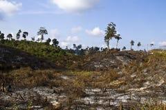 Geen boom in bergen, Myanmar Royalty-vrije Stock Fotografie