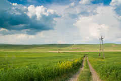Geen Field under the Blue Sky Royalty Free Stock Photos