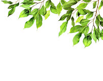 Geen leaves background Stock Photography