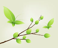 Geen leaves on a tree branch Stock Images
