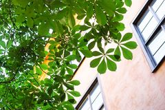 Geen living. Looking up at green leaves beside apartments Stock Photography