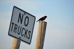 Geen Vrachtwagens Stock Foto's