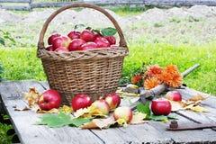 Geerntete Äpfel Lizenzfreies Stockfoto