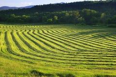 Geerntete Ernte in Stowe, Vermont Stockfotos