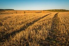 Geerntete Felder in Embleton-Bucht Stockbild