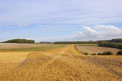 Geerntete Felder und Waldland Lizenzfreie Stockfotos