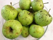 Geerntete grüne Äpfel lizenzfreie stockfotos