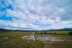 Geerntete Reisfelder an Ne-` gandeng Lizenzfreies Stockfoto