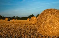 Geerntete Weizenfelder in Barkway lizenzfreie stockbilder