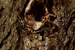 Geernteter Schuss der braunen Baumrinde Abstrakter Begriff lizenzfreie stockbilder
