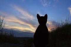 Geernteter Schuss einer schwarzen Katze Katze, die oben schaut Stockbilder