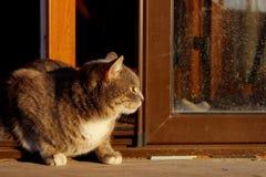 Geernteter Schuss von Cat Sitting Over Wooden Background Katze der getigerten Katze drau?en stockfoto