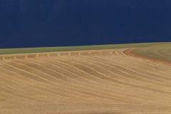 Geerntetes Feld mit parallelen Linien, die kurven Stockbild