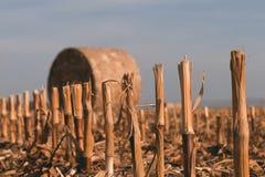 Geerntetes Feld mit Strohballen im Herbst Stockbilder
