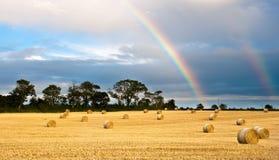 Geerntetes Feld nach dem Regen Stockfoto