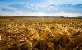 Geerntetes Getreidefeld und bewölkter Himmel Stockfotos