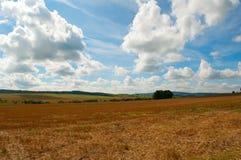 Geerntetes landwirtschaftliches Feld Stockfoto