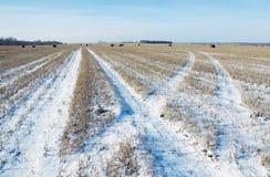 Geerntetes schneebedecktes Ackerland mit Rollen des gemähten Strohs Lizenzfreies Stockfoto
