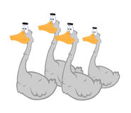 Free Geese Royalty Free Stock Photos - 15700078