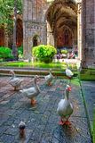 Geese in Barcelona Cathedral Cloister in the Gothic Quarter. Barcelona, Spain - August 7, 2010: Geese in Barcelona Cathedral Cloister in the Gothic Quarter in Stock Image